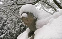 Snow Seal Gargoyle