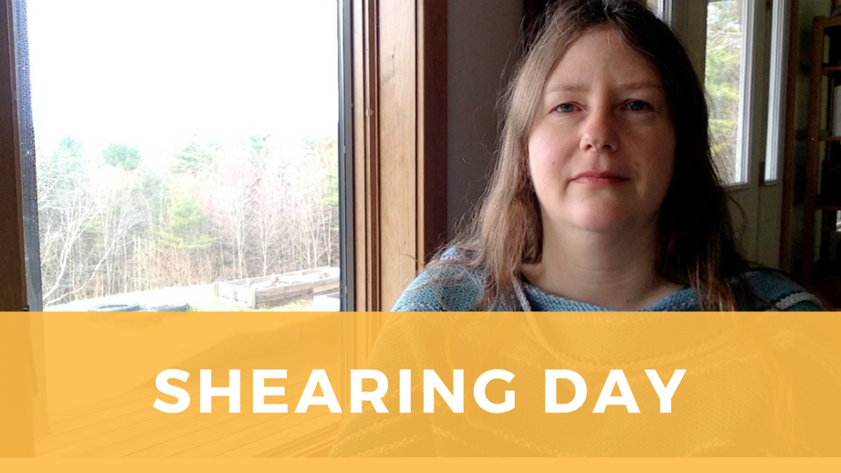 Shearing Day 2018: tips for a good fleece harvest