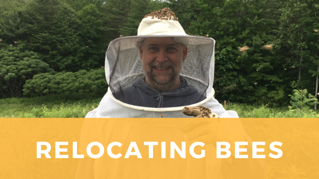 Click this image to go to the YouTube video of the bee relocation.