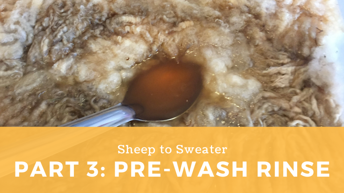 Sheep to Sweater – Part 3: Washing fleece with a pre-rinse